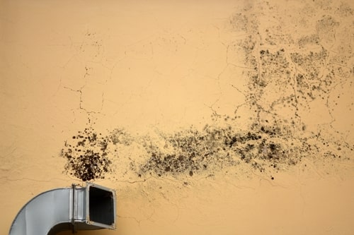 Clean A/C and Duct Work Avoid Black Mold