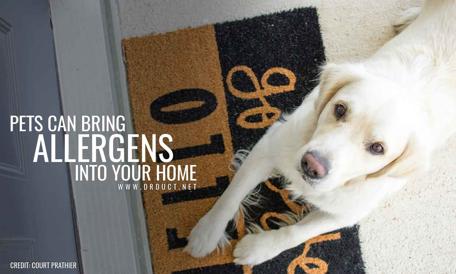 Pets can bring allergens into your home