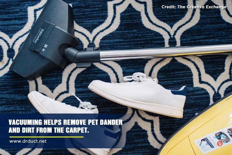 Vacuuming helps remove pet dander and dirt from the carpet.
